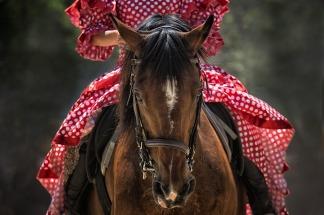 horse-1139142_960_720